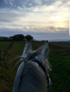 Morning on the gallops